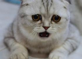 【横浜GOFEST】ハズレた。。。落選者予備軍の悲痛な叫び!当たれ当たれ当たれ!【皆に幸あれ】